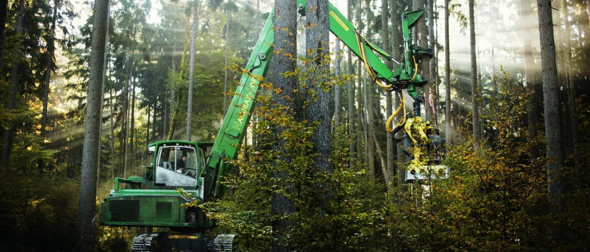 Big harvester harvests spruce tree in mixed Bavarian Forest