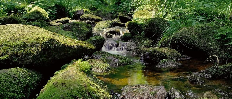 Small brook in a forst in Czech Republic