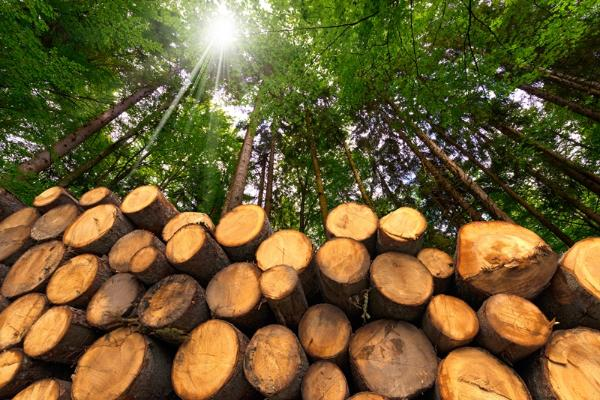 Mid-term review of the EU Forest Strategy: where do we stand?