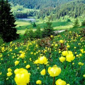 Forest and meadow with flowers
