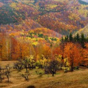 Autumn in Carphatian forests