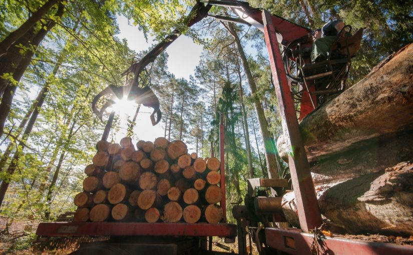 International Day of Forests 2018: European forests can deliver even more benefits to society