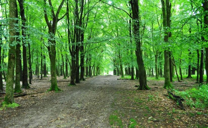 Growing the Irish Forest Bioeconomy