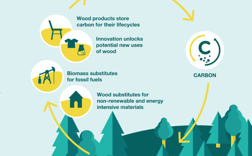 Sustainable forestry enables the bioeconomy:              Eight policy messages – EUSTAFOR looks ahead to a renewed  Bioeconomy Strategy