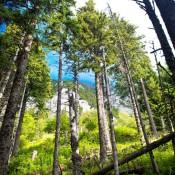 Forest Western Carphatians