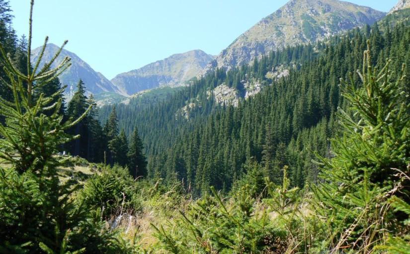 State Forest Conference – registration deadline 30.04.2017