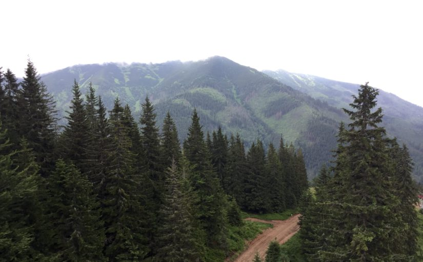 Executive Director visits Slovak Republic's State Forests