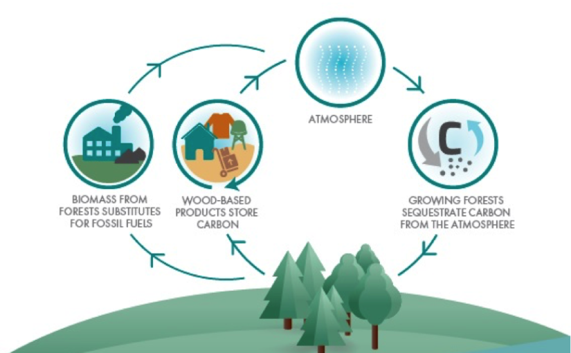 LULUCF Regulation: What impact for the forest management?