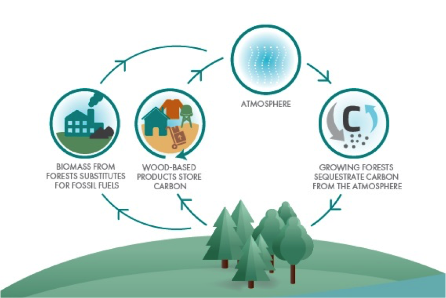 advantages of forests essay A forest is an area with a high density of trees there are many definitions of a forest, based on various criteria these plant communities cover approximately 94 per cent of the earth's surface (or 30 per cent of total land area) and function as habitats for organisms, hydrologic flow modulators.